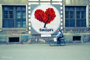 timisoara-19