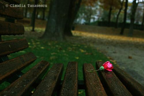 """""""trandafir"""""""