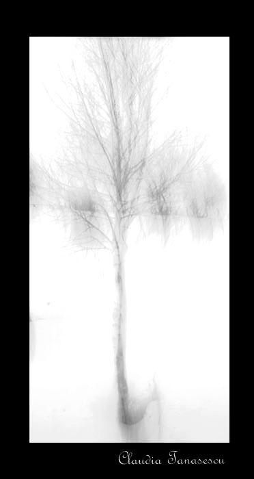 """""""fotografie abstracta"""""""