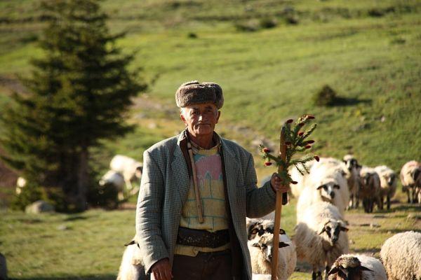 tarcu_025